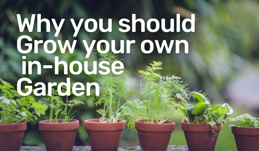 The Benefits of Growing an Urban Garden with Herbs, Vegetables and Fruit!